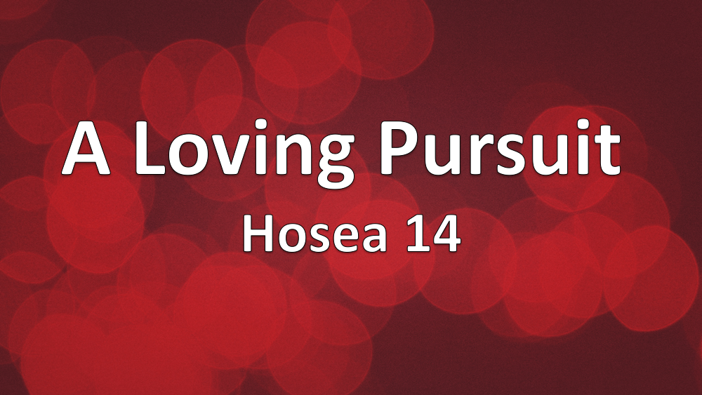 A loving Pursuit: Hosea 14 Image